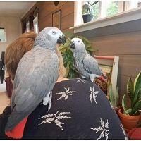 Super tame parrots